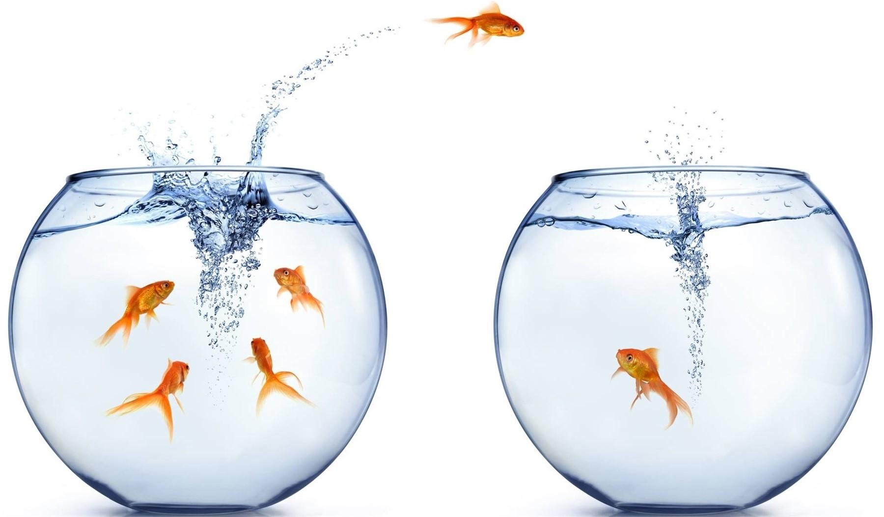 Các doanh nghiệp nên mạnh dạn sáng tạo và thay đổi để có thể chiếm ưu thế trên thị trường cạnh tranh hiện tại