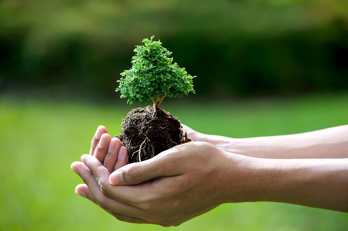 Chỉ khi khắc phục được vấn đề năng suất, canh tác hữu cơ sẽ phát triển và thể hiện nhiều hơn những tác động tích cực đến môi trường