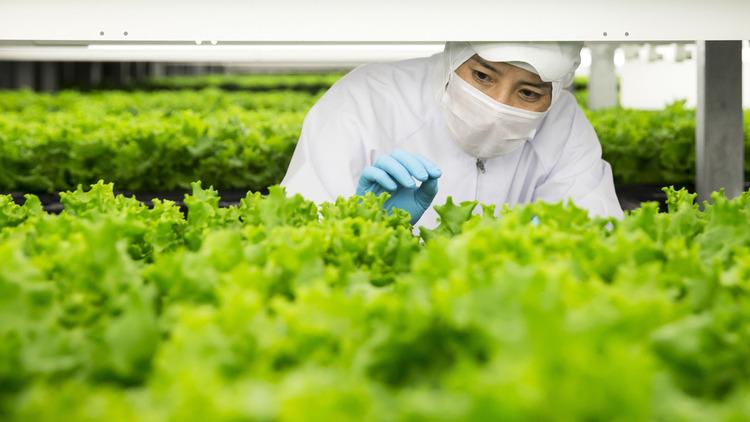 An ninh lương thực và môi trường là những vấn đề rộng hơn các doanh nghiệp cần quan tâm
