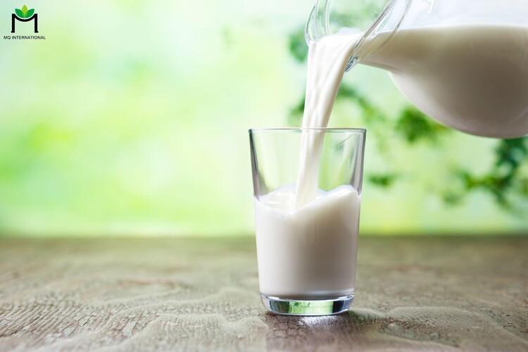 Sữa tươi thô chứa tồn dư kháng sinh không tốt cho sức khỏe